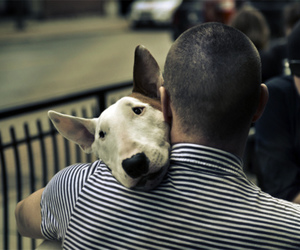 dog, bull terrier, and sweet image