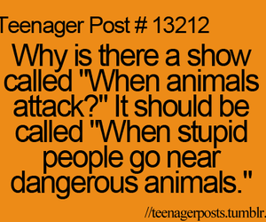 animals, funny, and lol image