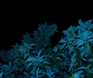 plants, grunge, and dark image