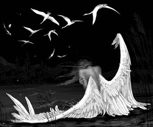 angel, wings, and bird image