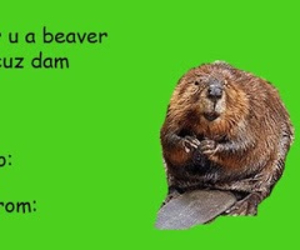 beaver, funny, and valentine image