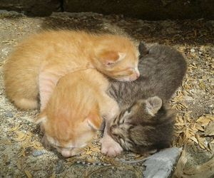 animal, babies, and cat image