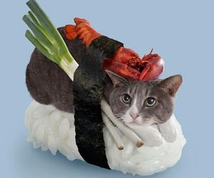 cat, sushi, and kawaii image