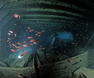 diver, fish, and ocean image