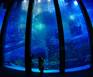 aquarium, fish, and water image