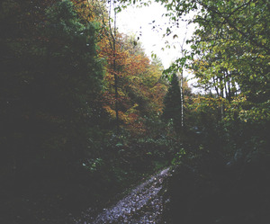 nature, indie, and tree image