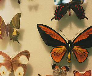 butterfly, colors, and vintage image