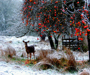 animal, apples, and berries image