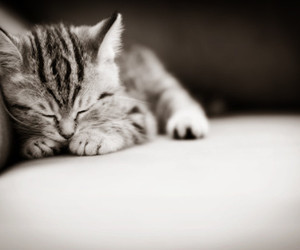 adorable, black and grey, and kitten image