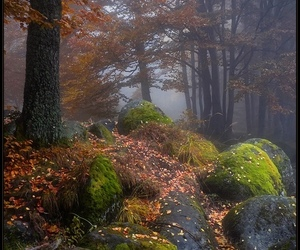 forest, landscape, and nature image