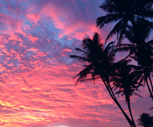 acid, colour, and palm trees image