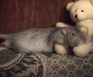 cute animals and rats image