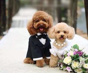 dog, cute, and wedding image