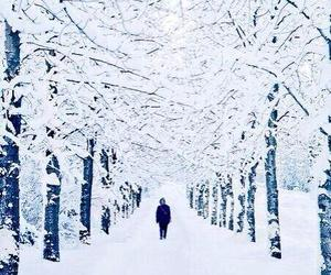 white and winter image