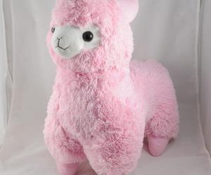 alpaca and pink image