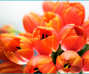 bouquet, orange, and flowers image