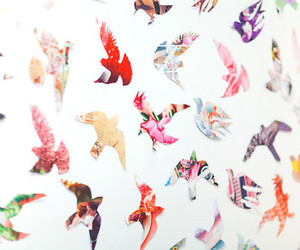 bird, background, and freedom image