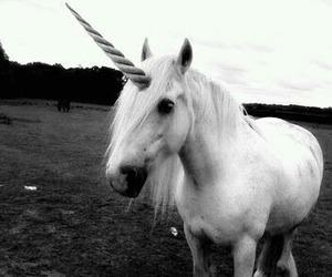unicorn, black and white, and horse image