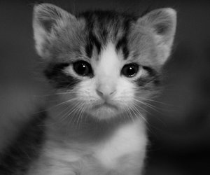 animals, black and white, and photography image