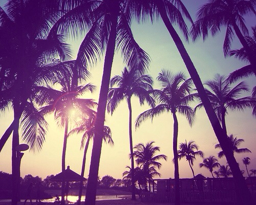 <3, cool, and paradise image