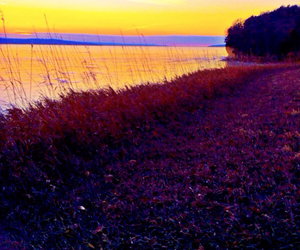 grass, lake, and life image