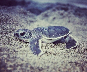 turtle, cute, and baby image