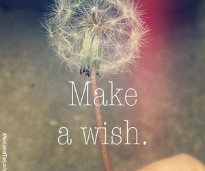 <3, make a wish, and wishes come true image