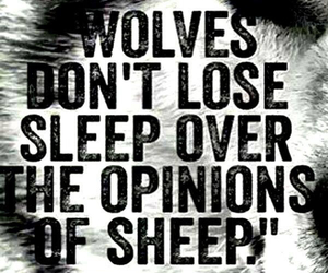 wolf, sheep, and opinion image