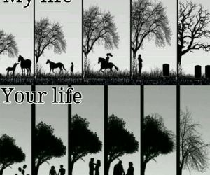 horse and life image