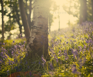 bluebells, flowers, and nature image