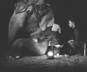 water for elephants, robert pattinson, and Reese Witherspoon image