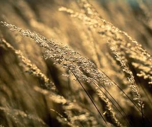 field, macro, and nature image