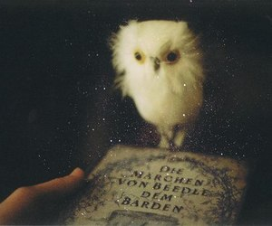 owl, book, and vintage image