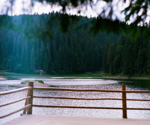 forest and lake image