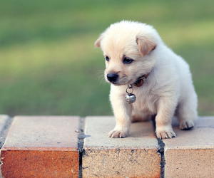 dog, cute, and puppy image