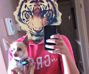 girl, pink, and tiger image
