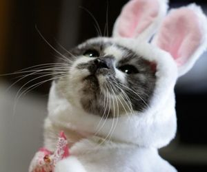 cat cute rabbit animal image