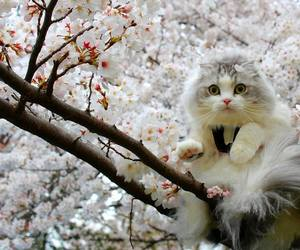 cat, tree, and flowers image