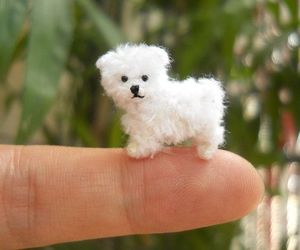 dog, finger, and tiny image