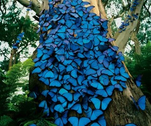 blue, lots, and butterfly image