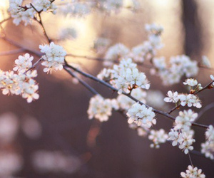 beautiful, white, and blossom image