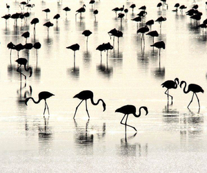 birds, black and white, and nature image