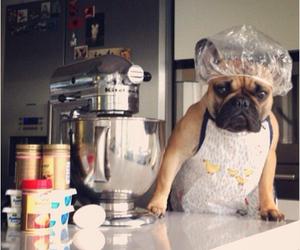 bulldog, cook, and dog image
