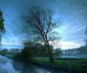tree, nature, and blue image