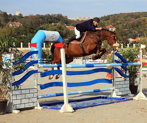 horse, show jumping, and jump image