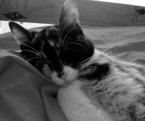 black and white, chaton, and kitty image