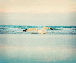 beach, bird, and birds image