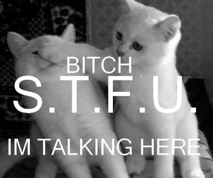 cat, bitch, and stfu image