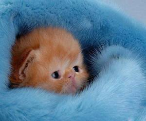 blue, red, and cute image