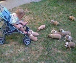 funny, puppy, and baby image
